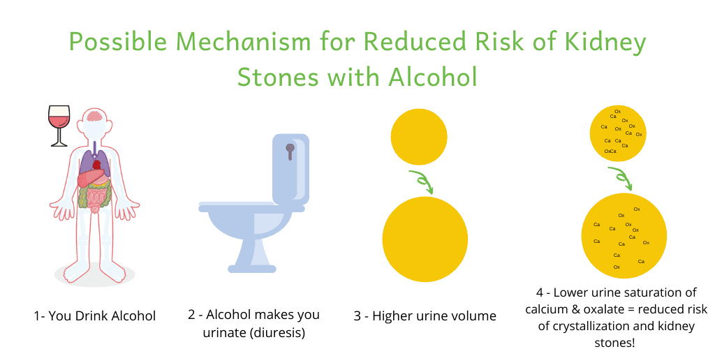 alcohol, kidney stones and diuresis